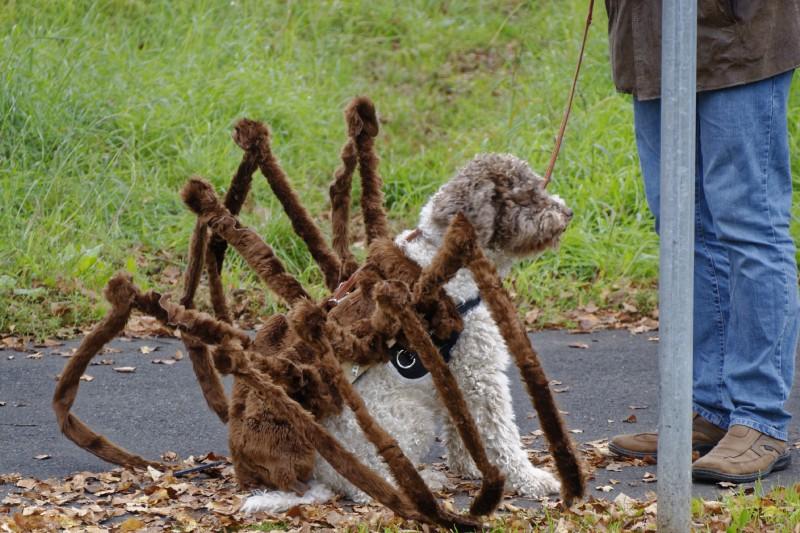 hundespinne spinnenhund