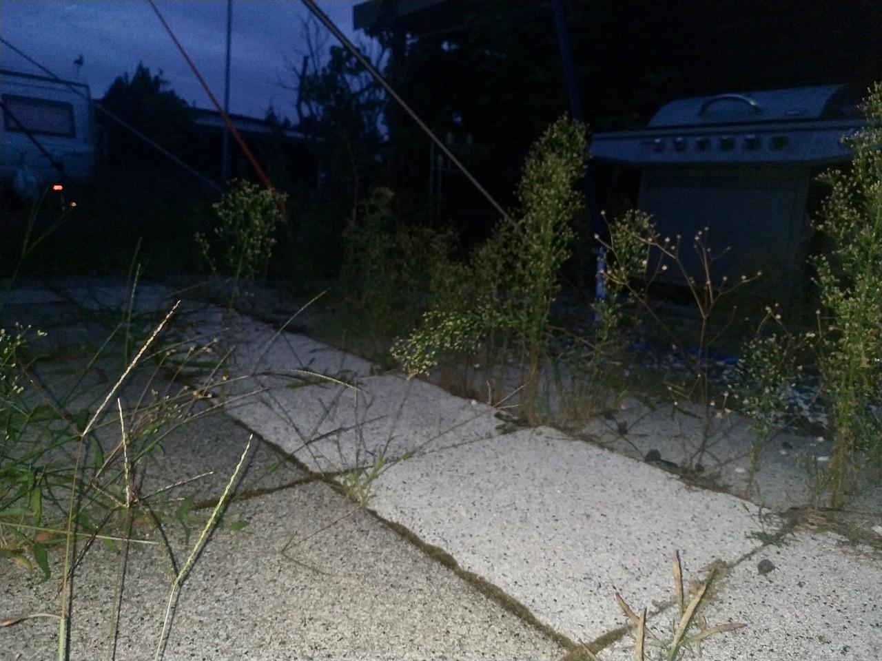 gehwegplatten pflanzen